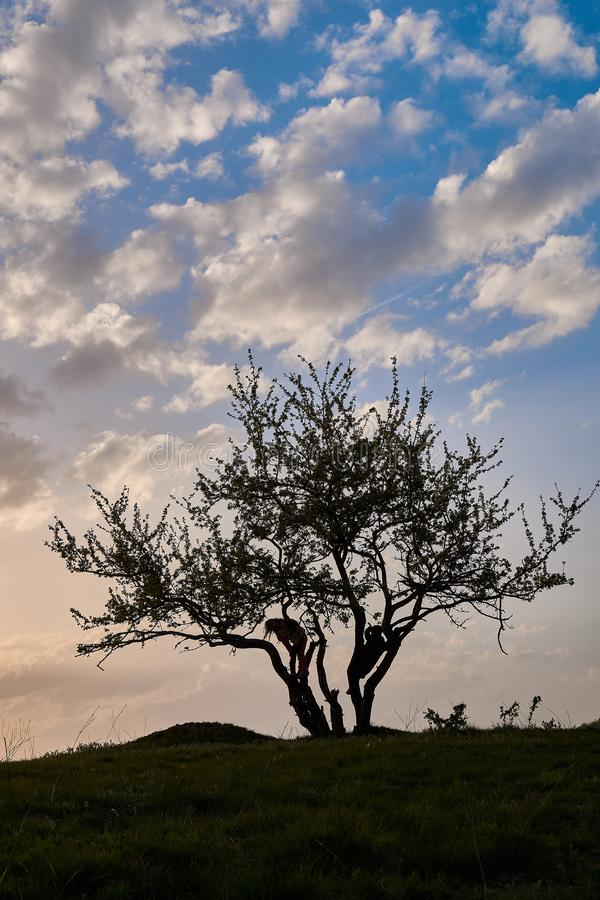 Puesta del sol y silueta de un muchacho y de una muchacha del árbol imágenes de archivo libres de regalías