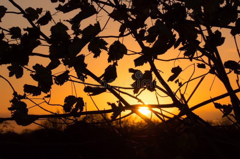 Puesta del sol y siluetas fotos de archivo libres de regalías
