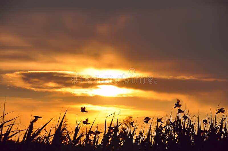 Puesta del sol y siluetas de pájaros foto de archivo