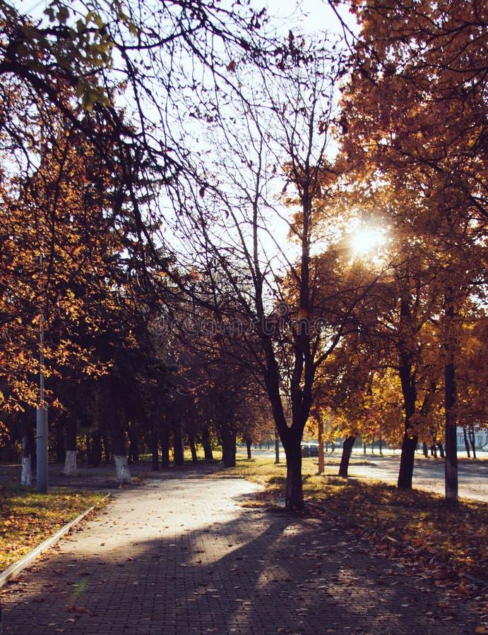 Puesta del sol y sombras de los árboles Luz del sol a través del follaje del árbol Hojas amarillas, rojas, verdes en luz del sol fotografía de archivo libre de regalías
