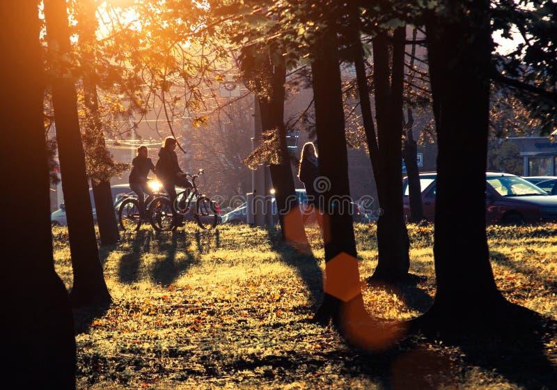 Puesta del sol y sombras de los árboles Luz del sol a través del follaje del árbol Hojas amarillas, rojas, verdes en luz del sol imagenes de archivo