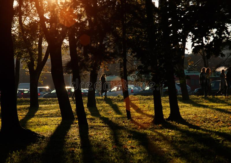 Puesta del sol y sombras de los árboles Luz del sol a través del follaje del árbol Hojas amarillas, rojas, verdes en luz del sol foto de archivo libre de regalías