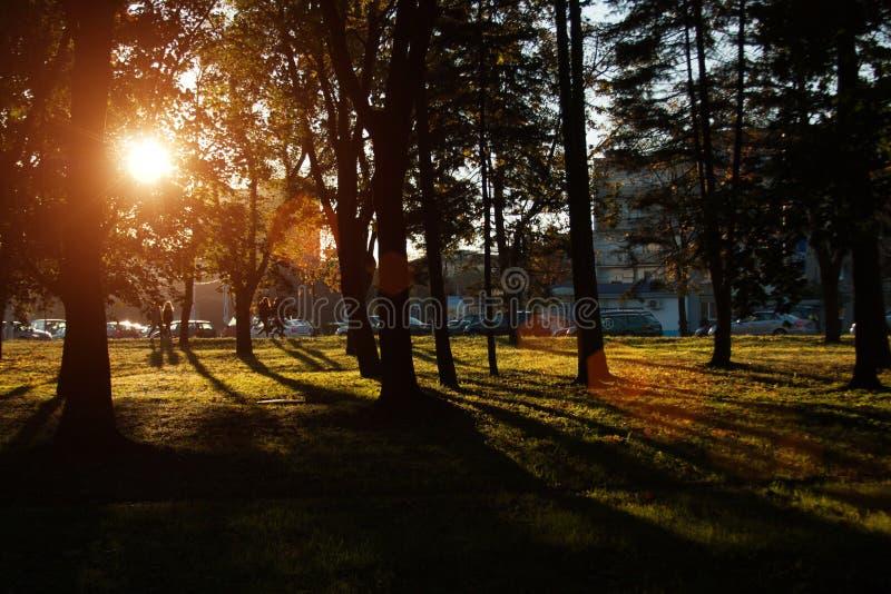 Puesta del sol y sombras de los árboles Luz del sol a través del follaje del árbol Hojas amarillas, rojas, verdes en luz del sol fotos de archivo
