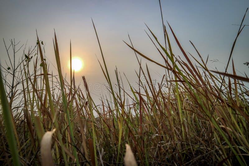 Puestas del sol hermosas con opiniones la hierba en el primero plano fotos de archivo