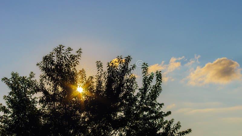 Puestas del sol sobre árboles, colores agradables del cielo fotografía de archivo