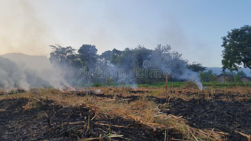 A puff of smoke on sugar cane farms stock photo