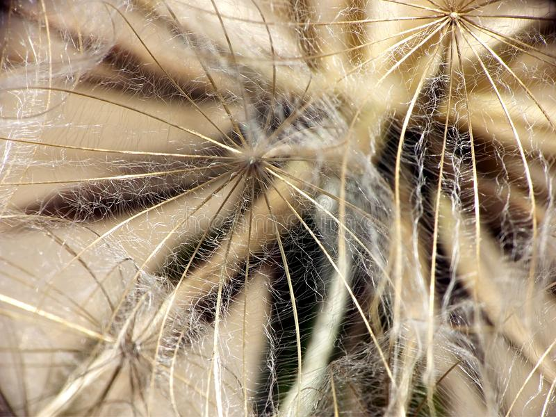 Puffball Closeup Free Stock Image