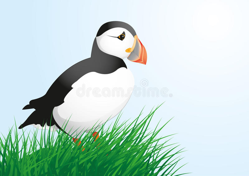 puffin ilustración del vector