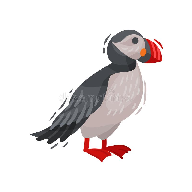 Puffin bird image. Cartoon Icelandic puffin. Vector illustration. royalty free illustration