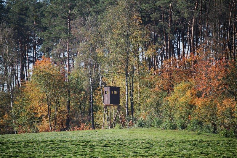 Puffin de forêt près du bois d'automne photo stock