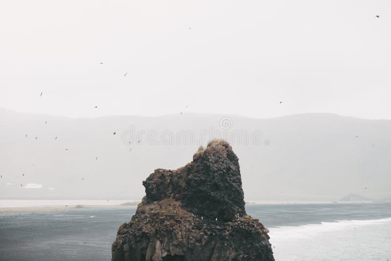 Puffins on beautiful rock formation in water near icelandic seacoast, vik dyrholaey, reynisfjara. Beach, iceland stock images