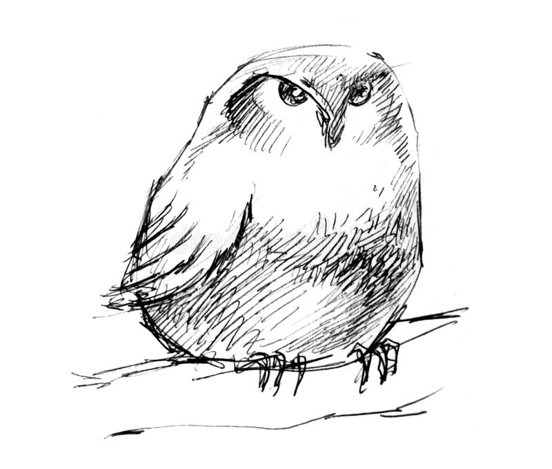 Puffy owl pencil drawing royalty free illustration
