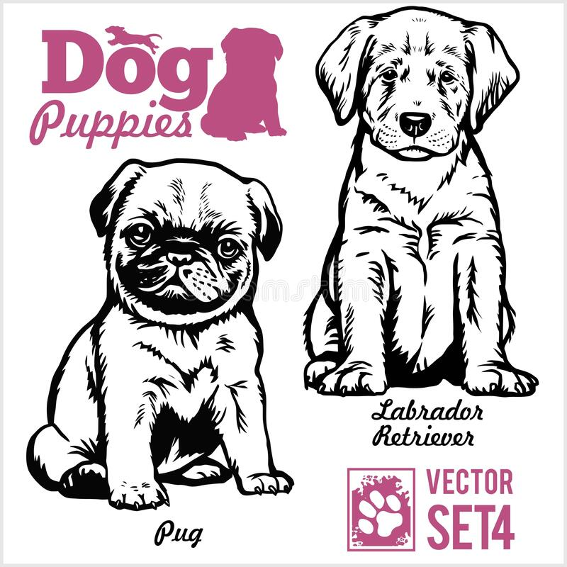 Free Pug And Labrador Retriever - Dog Puppies. Vector Set. Funny Dogs Puppy Pet Characters Different Breads Doggy Royalty Free Stock Image - 171451156