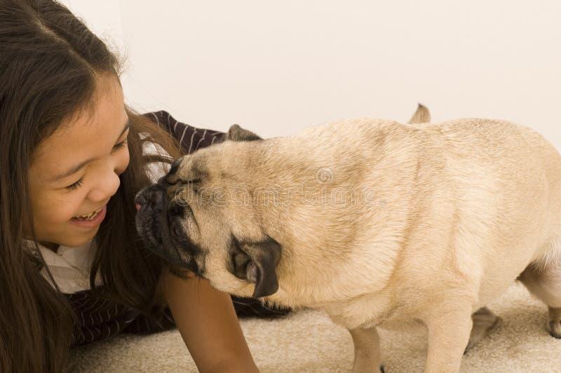 Pug, der versucht, Mädchen einen Kuss zu geben stockfotos