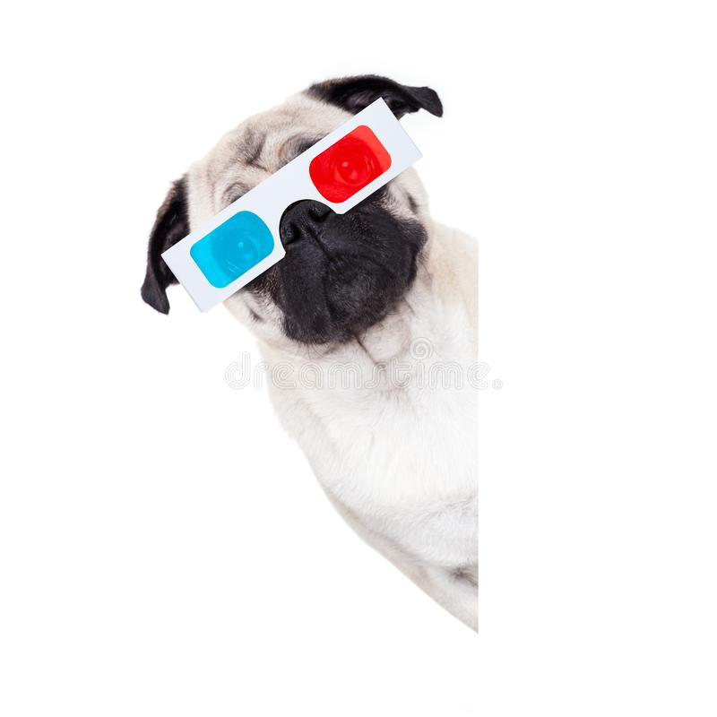 Dog watching the movies stock photos