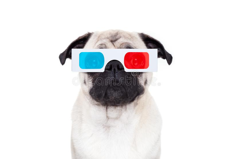 Dog watching the movies royalty free stock image