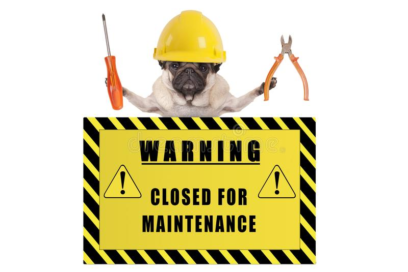 Pug dog with constructor safety helmet holding pliers and screwdriver with yellow warning sign saying closed for maintenance. Isolated on white background royalty free stock photo