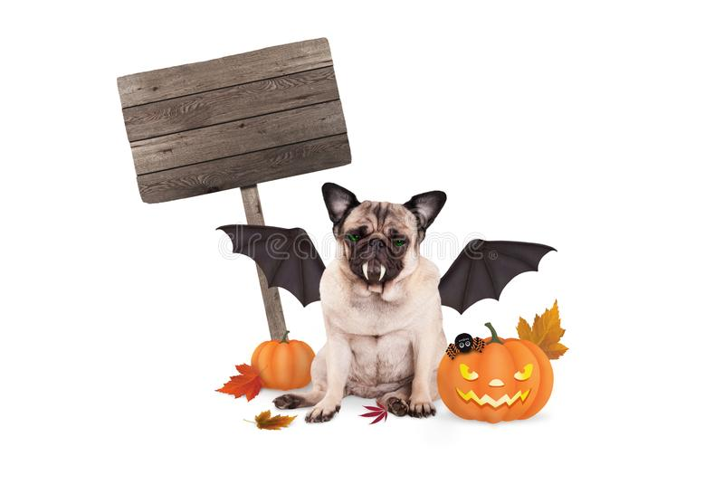 Pug dog dressed up as bat for halloween, with scary pumpkin lantern and blank wooden sign stock photo