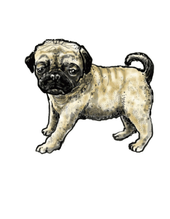 Pug-dog. A dog of a dwarf breed like a bulldog with a broad flat nose and deeply wrinkled face vector illustration