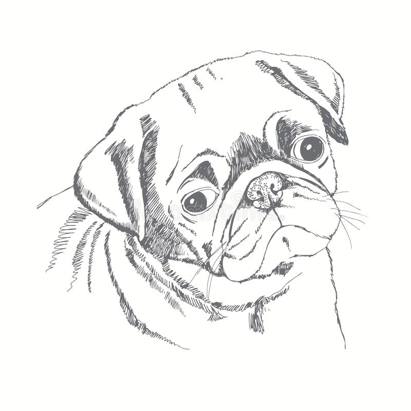 Amazing Designer Chubby Adorable Dog - pug-dog-face-hand-drawn-illustration-sketch-cute-vector-47219947  HD_696747  .jpg