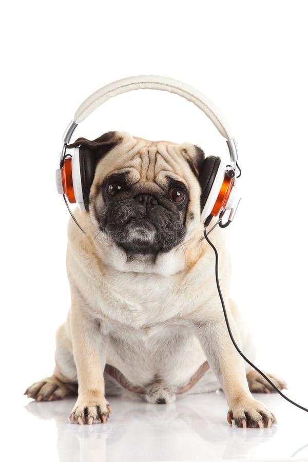 Pug dog with headphone isolated on white background stock photo