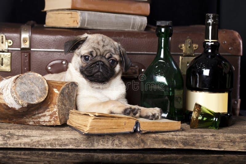 Download Pug-dog stock illustration. Illustration of design, line - 40139154