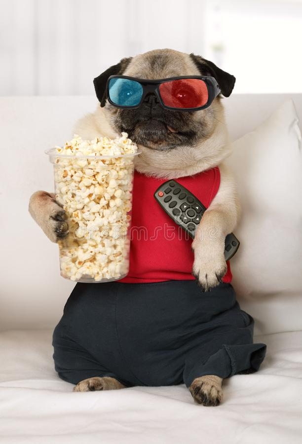 Pug dog watch TV lounging on the sofa. Pug dog in the three-dimensional glasses with a remote control in his paws and popcorn watch TV lounging on the sofa royalty free stock photos