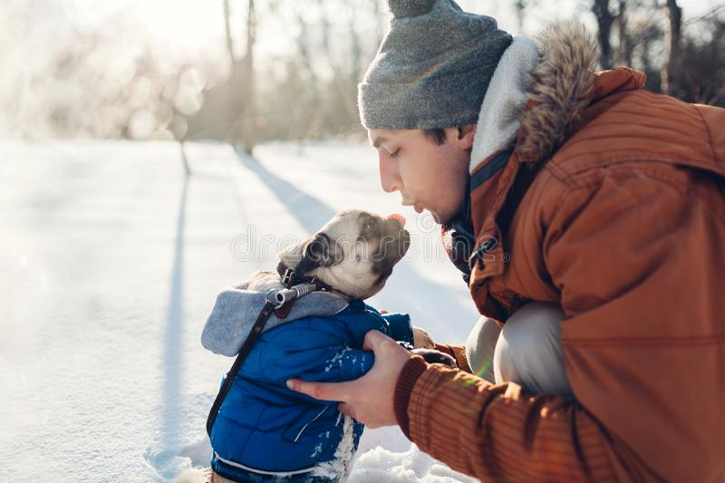 Pug dog walking on snow with his master. Puppy wearing winter coat. Man kissing his pet in winter forest. Clothes for animals royalty free stock images