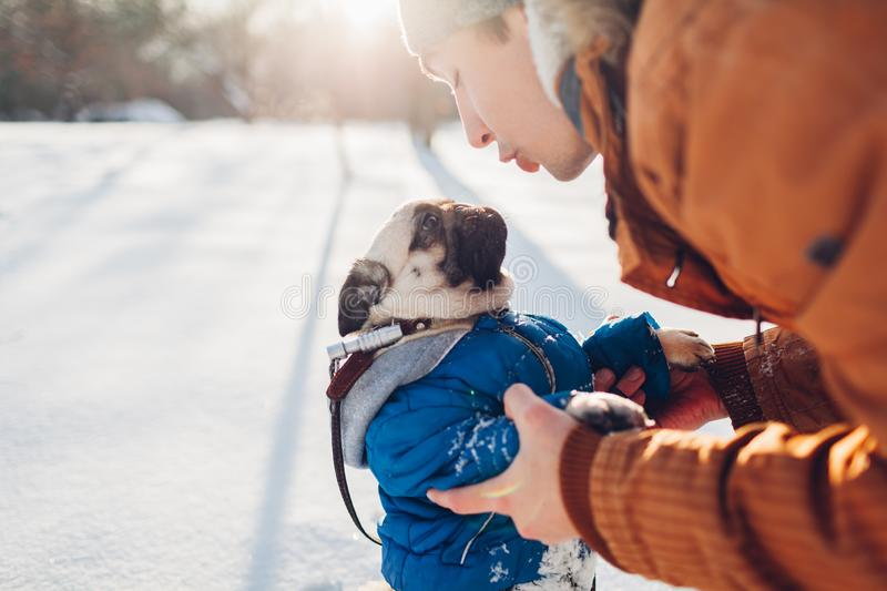 Pug dog walking on snow with his master. Puppy wearing winter coat. Man talking to pet. In winter forest. Clothes for animals stock images