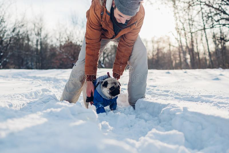 Pug dog walking on snow with his owner. Man playing with pet outdoors. In winter royalty free stock photography