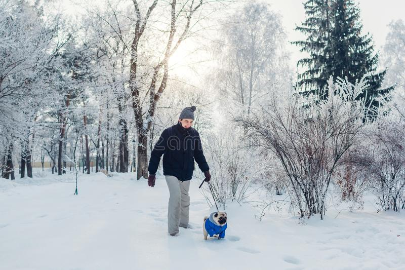 Pug dog walking on snow with man in park. Puppy wearing winter coat outdoors royalty free stock photos