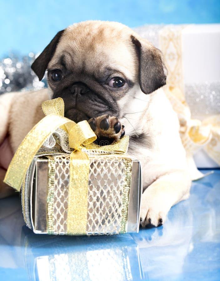 Pug e presentes do filhote de cachorro fotos de stock