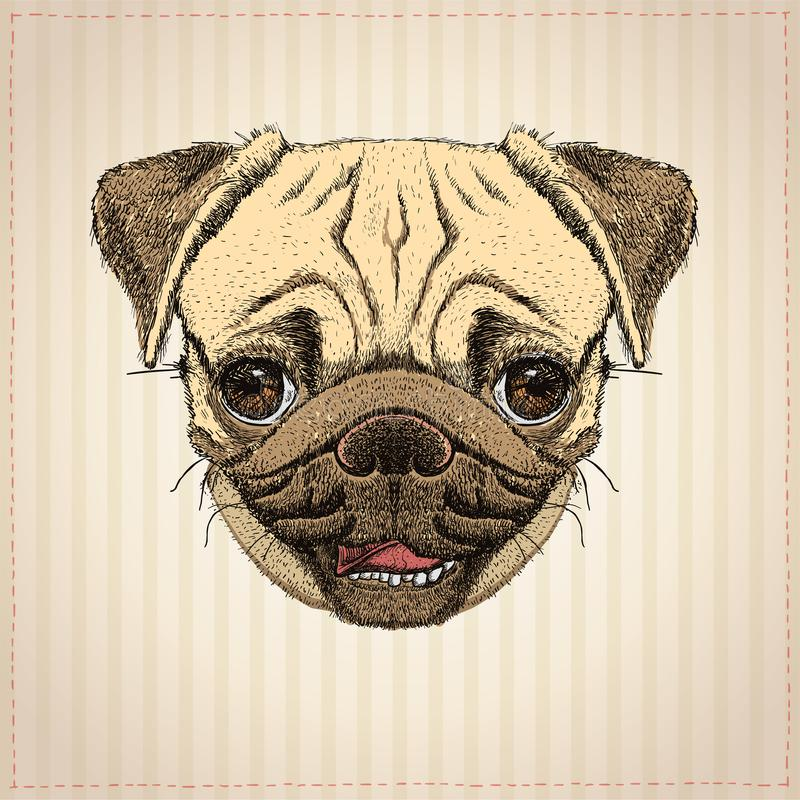 Pug hond grafisch portret vector illustratie
