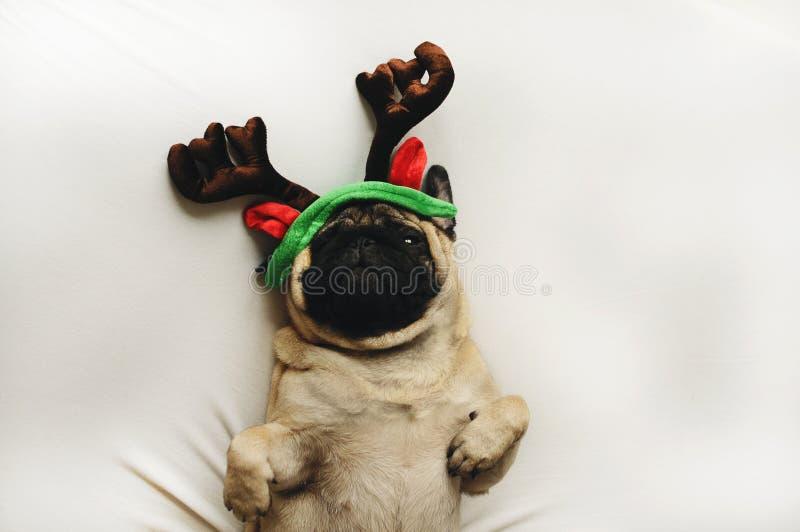 Pug hond in Kerstmiskostuum royalty-vrije stock foto