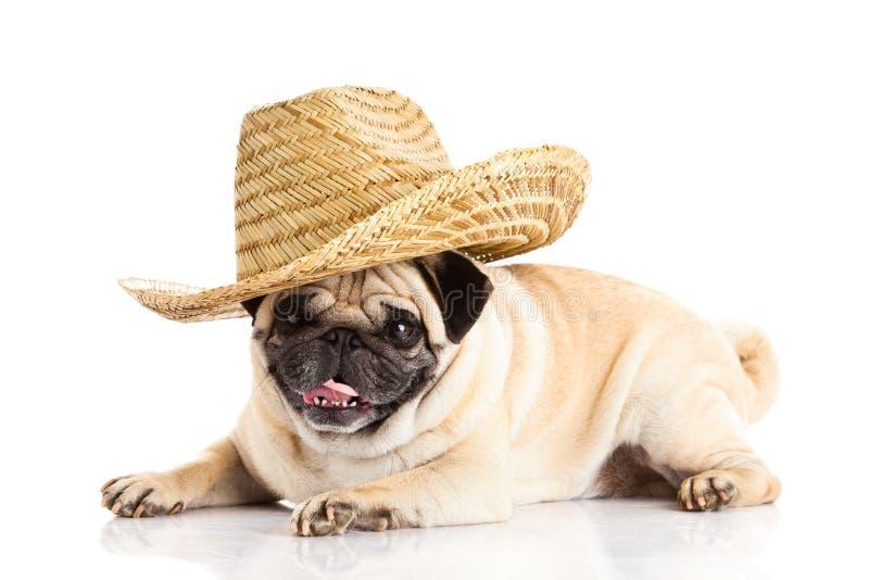 Pug hond Mexicaanse die hoed op witte achtergrond het liggen hond wordt geïsoleerd stock foto