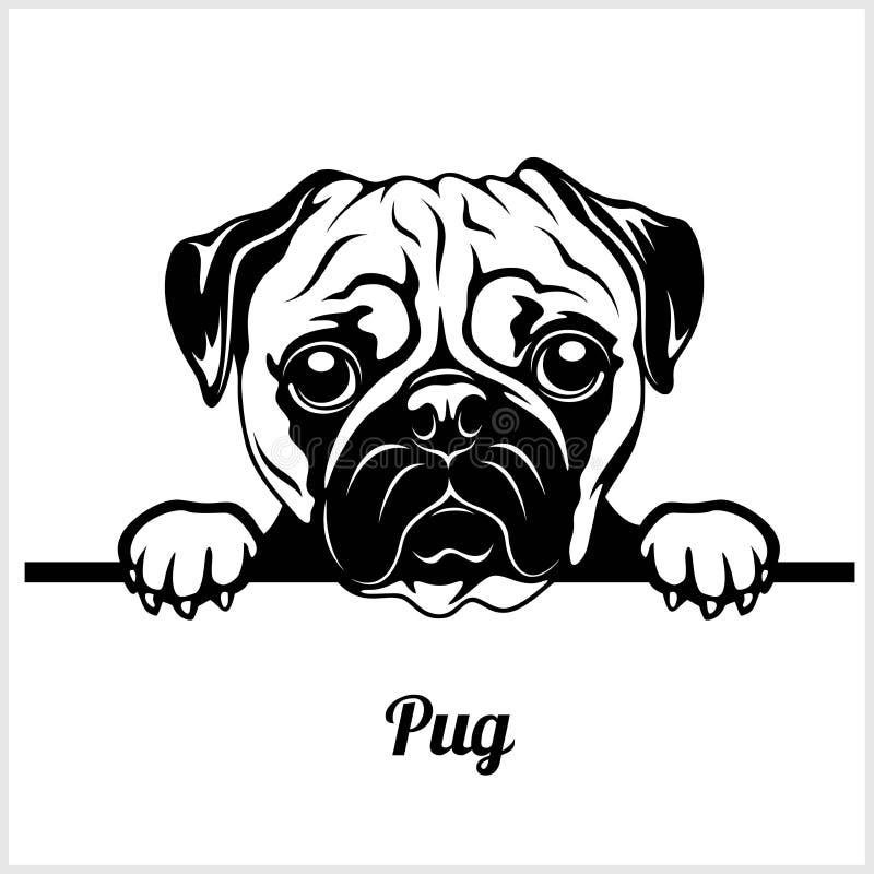 Pug - Hunde spähend - Zuchtgesichtskopf lokalisiert auf Weiß stock abbildung