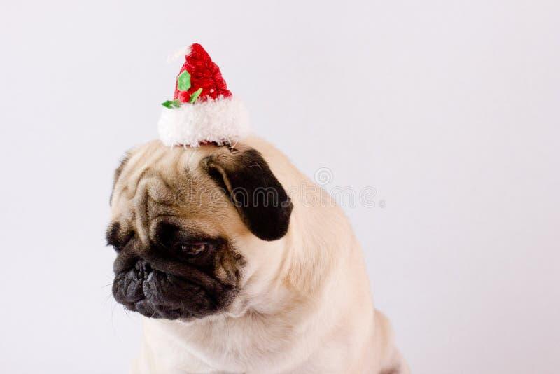 Pug muito triste do cão com o chapéu do Natal na terra branca isolate fotos de stock royalty free