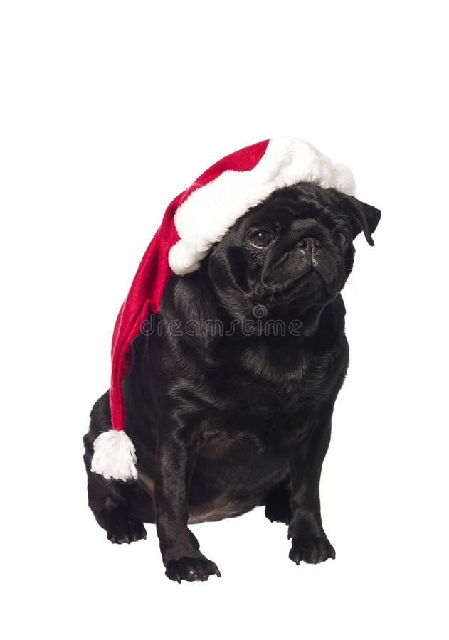 Pug preto com um chapéu de Santa fotografia de stock royalty free