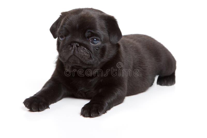 Black And White Pug Glasses