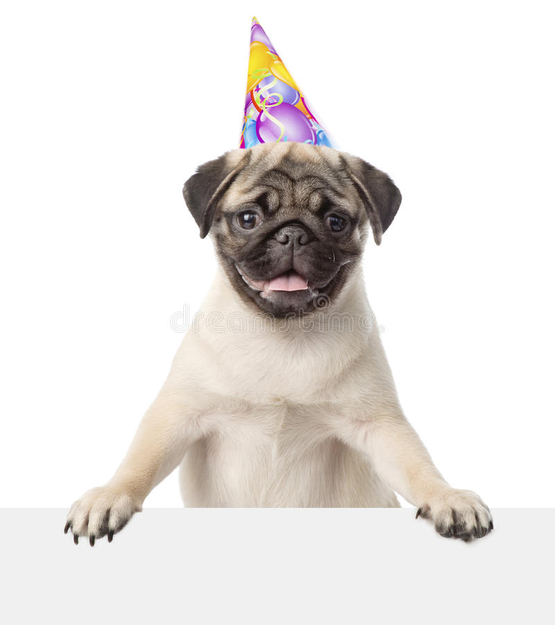 Pug puppy with birthday hat peeking from behind empty board. isolated on white.  royalty free stock images