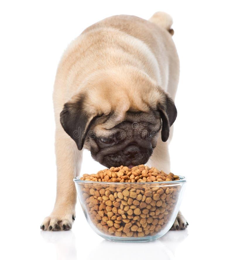 Pug puppy die voedsel van een grote kom eten Geïsoleerd op wit stock afbeeldingen