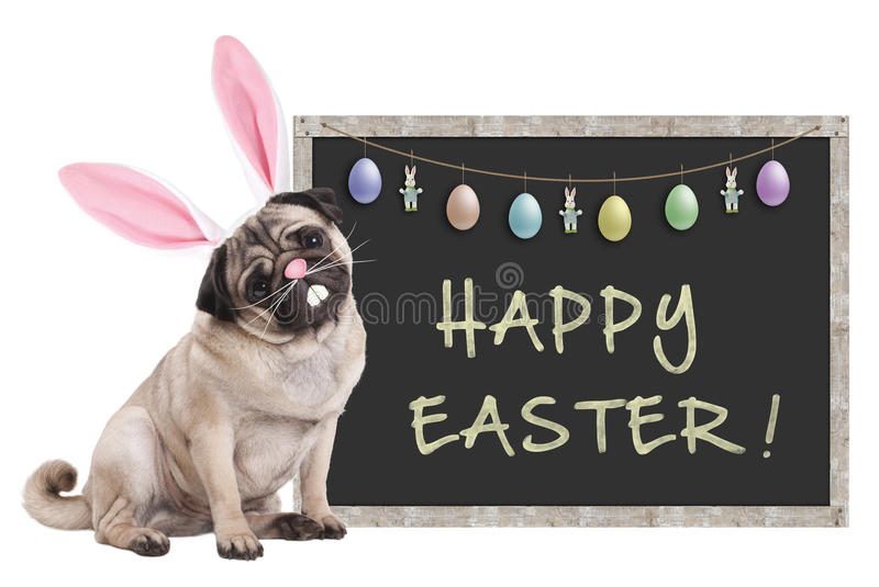 Pug puppy dog with bunny ears diadem sitting next to chalkboard sign with text happy easter and decoration, on white background stock photos