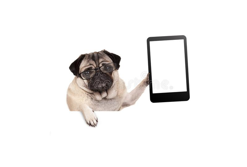 Pug puppy dog with glasses holding up blank tablet or mobile phone download pug puppy dog with glasses holding up blank tablet or mobile phone hanging on voltagebd Choice Image