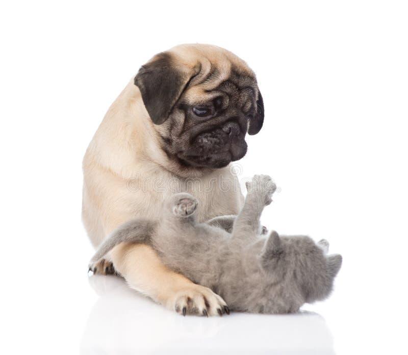 Pug puppy het spelen met uiterst klein katje Geïsoleerdj op witte achtergrond stock afbeelding