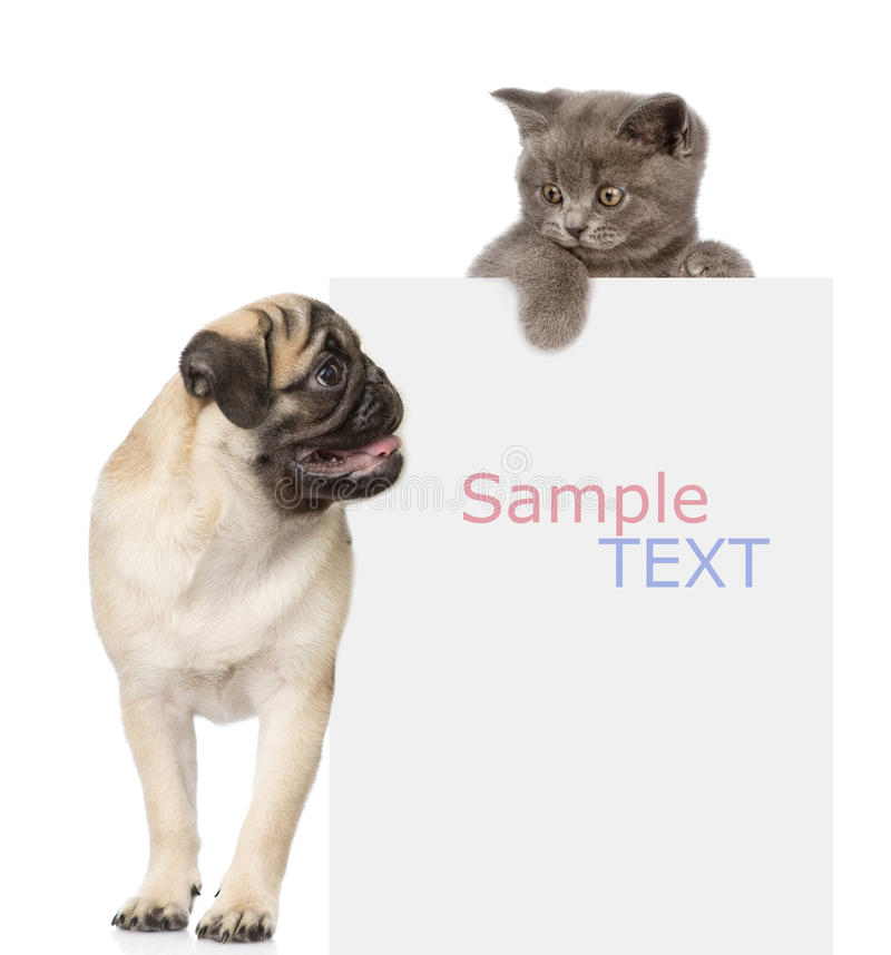 Pug puppy and small kitten above white banner. looking down. isolated. On white royalty free stock image
