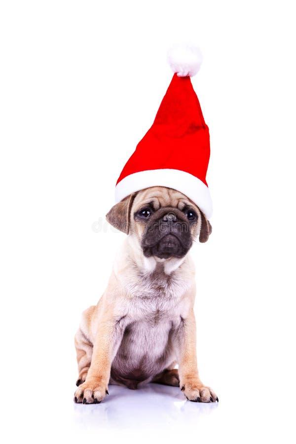 Pug puppy wearing a santa hat royalty free stock image