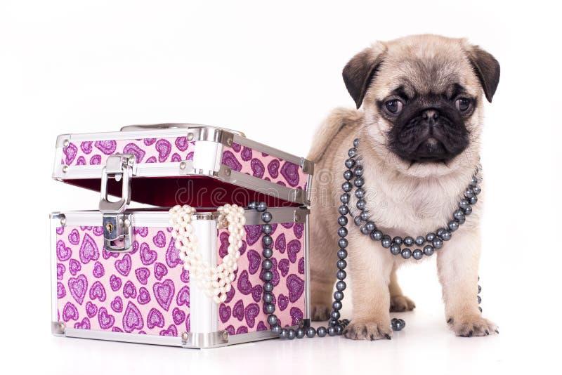 Download Pug purebred puppy stock image. Image of retro, friend - 18254783