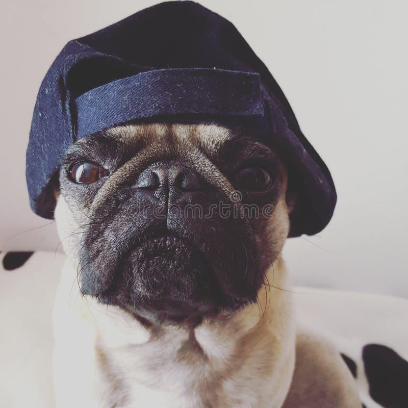 Pug rebel royalty free stock photos
