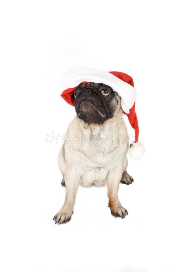 Pug in santa hat royalty free stock photos