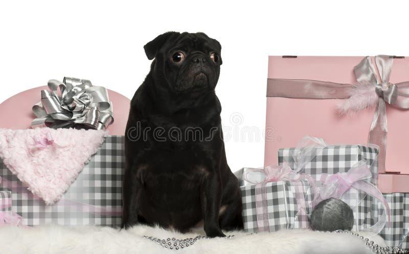Download Pug Sitting With Christmas Gifts Stock Image - Image: 22629831